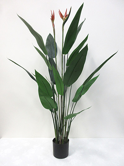 4′ Potted Bird of Paradise Plant