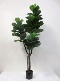 6′ Potted Fiddle Leaf Tree
