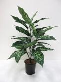 27″ Dieffenbachia Plant