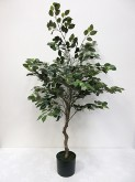 4′ Potted Ficus Tree