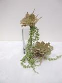 9″ Eichornia & Succulent Bouquet