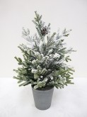 "15"" Potted Snow Pencil Pine Tree"