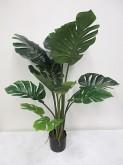 4′ Potted Split Philo Plant