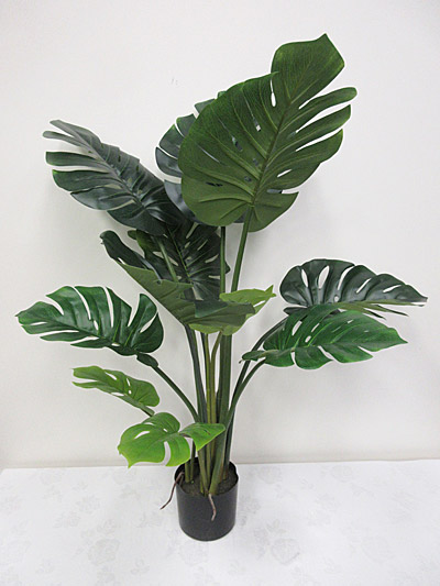 4′ Potted Split Philo Plant