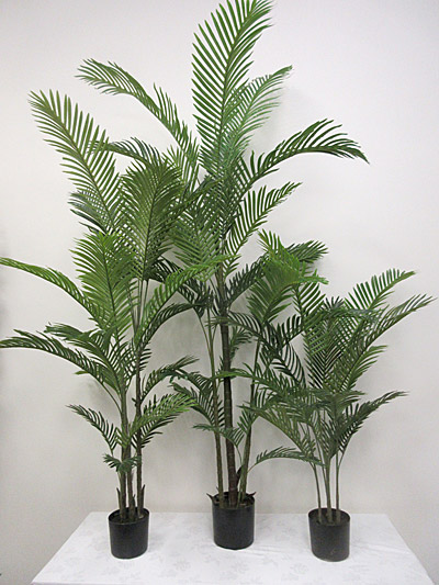 4.5′ / 6′ / 8′ Potted Kentia Palm