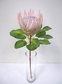 29″ King Protea (PINK)