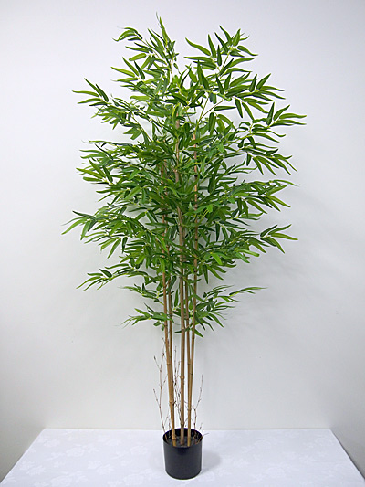 6′ Potted Bamboo Tree