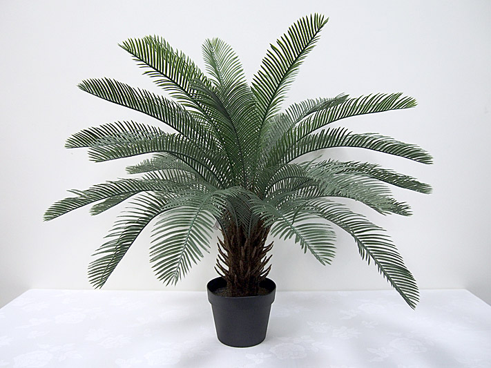 2.5′ Potted Cycas Palm