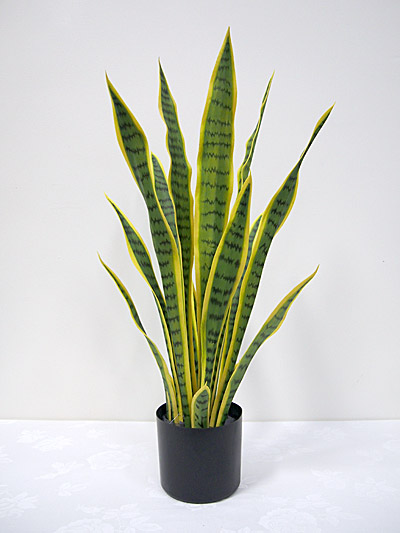 2.5′ Potted Sansevieria Plant (Mother-in-Law's Tongue)