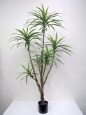6.5′ Potted Dracaena Plant