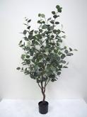 5′ Potted Eucalyptus Tree