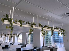 Office Overhead Planters
