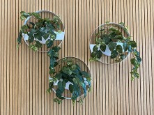 Office Wall Planters