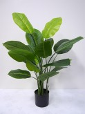 3′ Potted Scindapsus Plant
