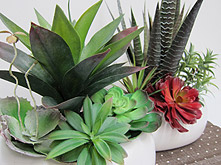 Agaves and Succulents